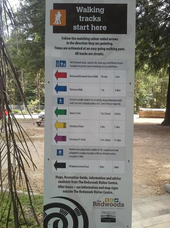 Redwoods, Whakarewarewa Forest: Redwoods Whakarewarewa Forest pick your path