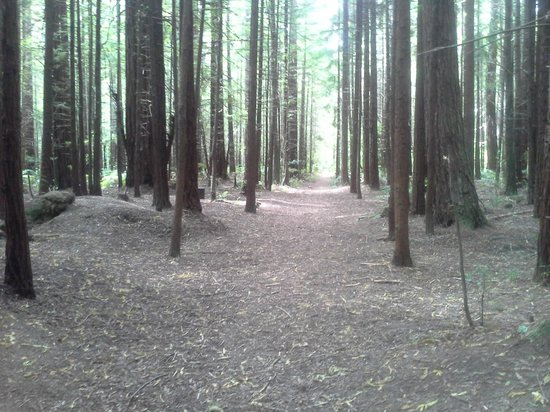 Redwoods, Whakarewarewa Forest: Redwoods Whakarewarewa Forest