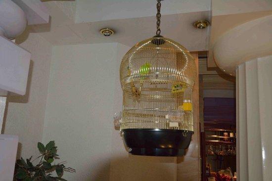 Hotel Man-Tess: Клетка с попугаем
