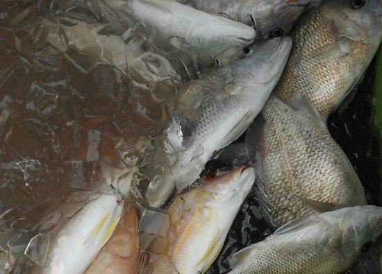 Linda D Sportfishing: The catch