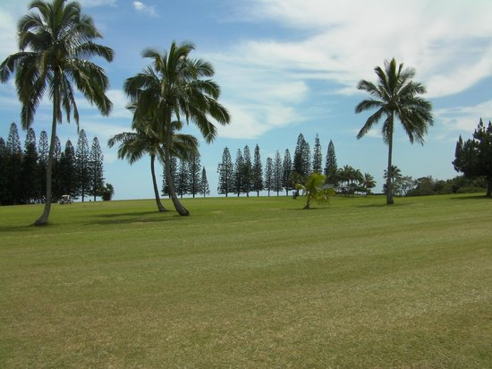 Kukuiolono Golf Course : Norfolk pines