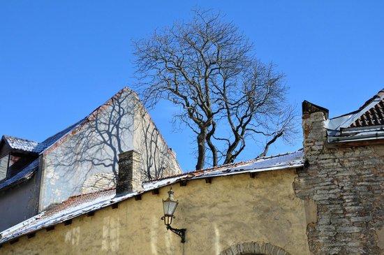 Tallinn Free Tour : Старый город