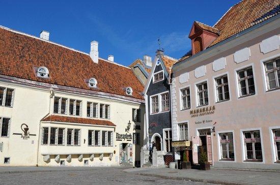 Tallinn Free Tour : Ратушная площадь