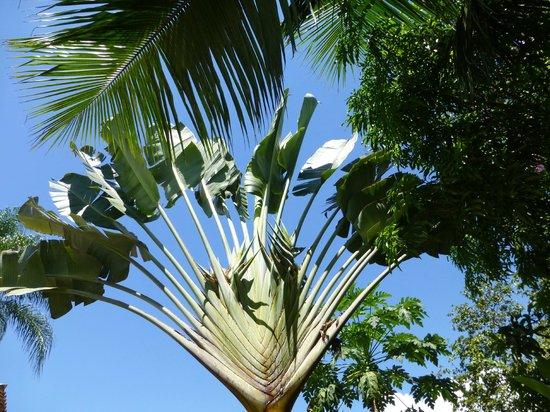 Vivenda Paraty: Tropische Planzen im Garten
