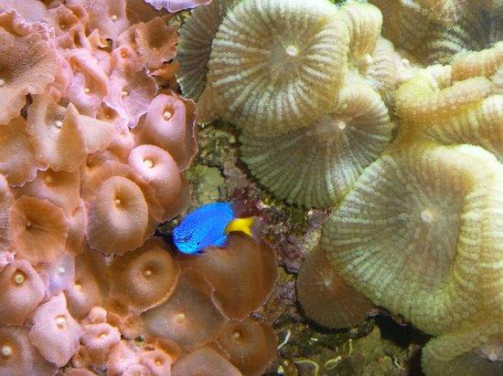 Konger Tarpon Springs Aquarium: fish