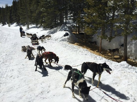 Monarch Dog Sled Rides: After the trip