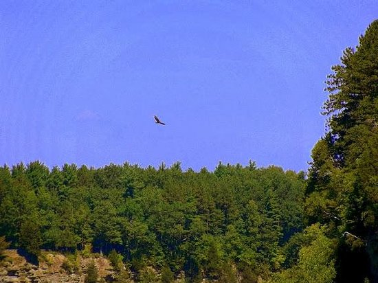 Letchworth State Park: turkey buzzards over the canyon