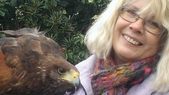 Stockley Farm Birds of Prey Centre: georgie the Harris hawk