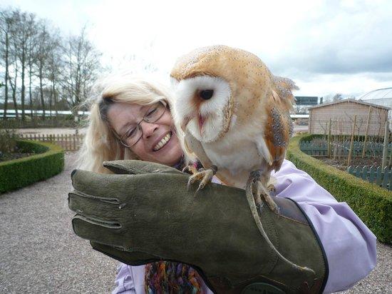 Stockley Farm Birds of Prey Centre: Darwin? the Barn Owl