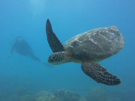 Living Ocean Scuba: Katie and her new turtle friend