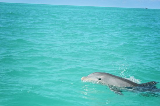Take Me There Charters: Dophin watching, Key West