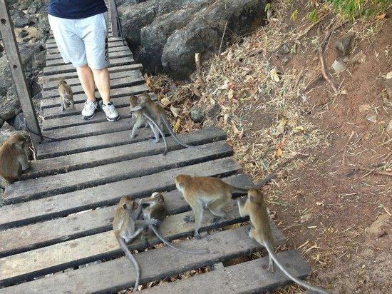 "Centara Grand Beach Resort & Villas Krabi: The famous ""monkey trail"""