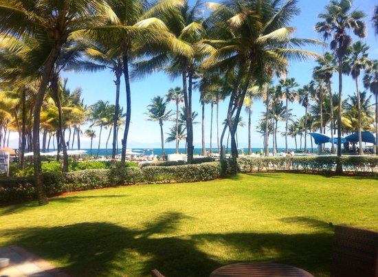 Caribe Hilton San Juan: A view of the palm trees on the property