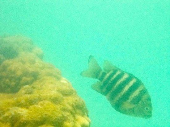 Royal Huahine : Snorkeling