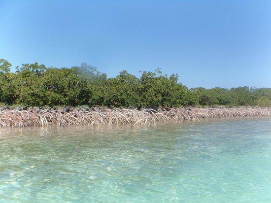 Starfish The Exuma Adventure Center: Mangroves