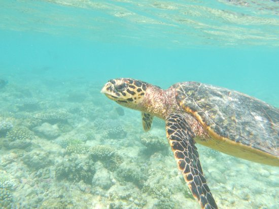 Bathala Island Resort: tarta