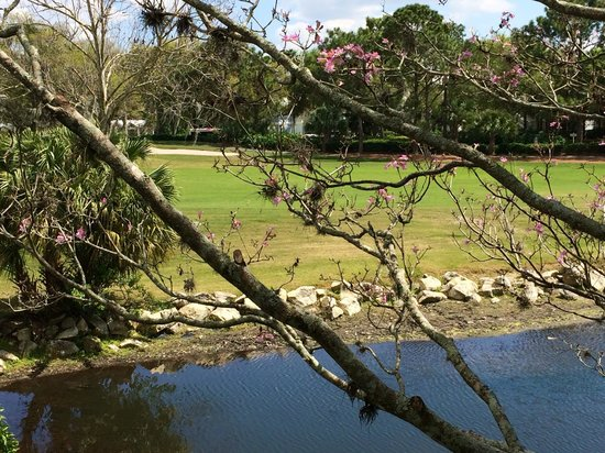 Disney's Old Key West Resort : View of the Golf Course from Our Room