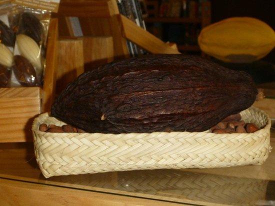 Ah Cacao Chocolate Cafe: Cacao bean