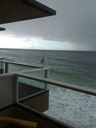 Pacific Edge Hotel on Laguna Beach: View from our deck, right over the beach