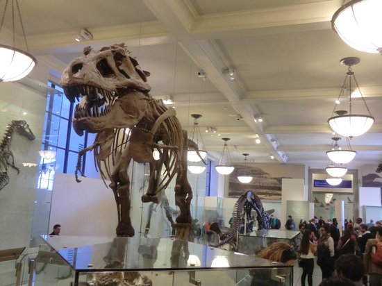 American Museum of Natural History : La estrella del muse: el tyranosaurio!!