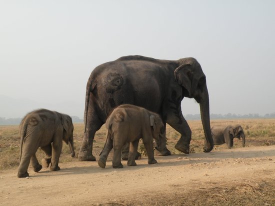 Kaziranga National Park : elephant safari team