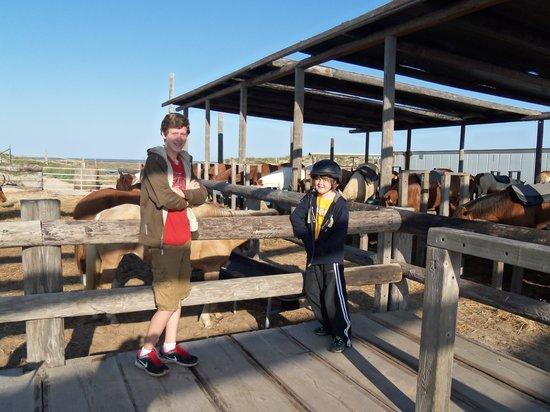 South Padre Island Adventure Park: Stables & longhorn cattle