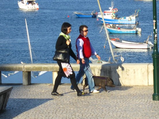 Cascais: Taking their pig for a walk