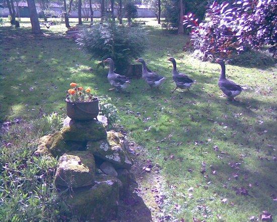 Le Pigeon Voyageur : parc