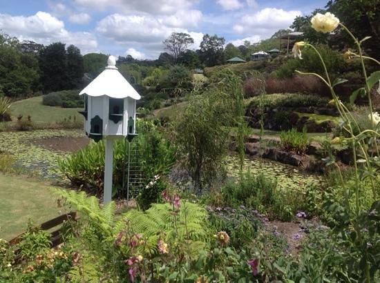 Maleny Botanic Gardens & Bird World: Wonderful visit.