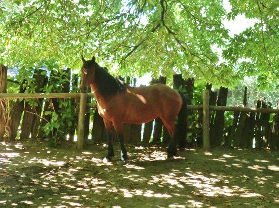 Campo Antilco : Pretty lady!