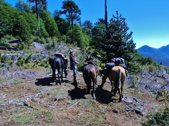 Campo Antilco : Our guide taking care of the horses