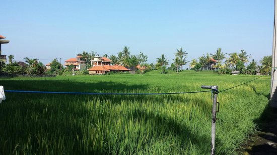 Nirwa Ubud Homestay: Rice fields view (back side of Nirwa)
