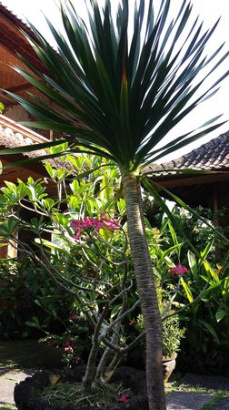 Nirwa Ubud Homestay: Nirwa grounds and vegetation