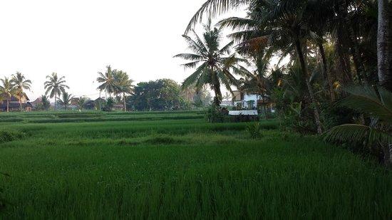 Nirwa Ubud Homestay : Window view from room 4