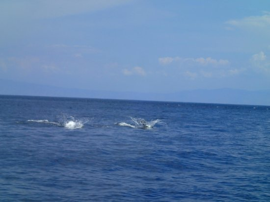 Compass Charters & Ocean Adventures : Whales and Dolphins Everywhere!