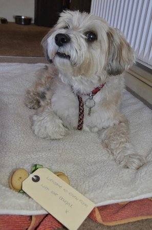 Elvey Farm: Bailey with his Bonio gift from Dougal