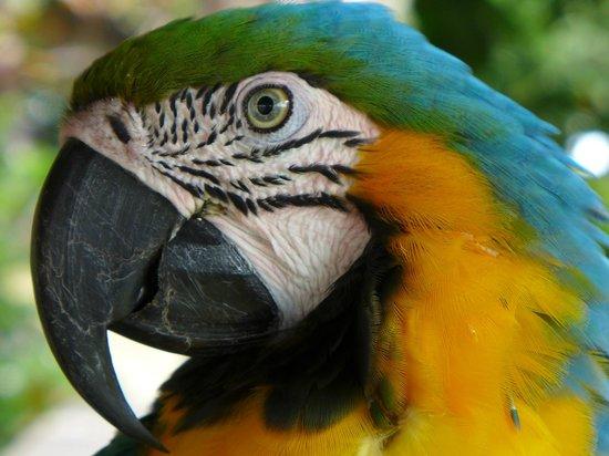 Tariri Amazon Lodge : Fauna