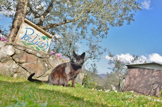 Agriturismo Colle Cesoni : Passeggiando nell'agriturismo