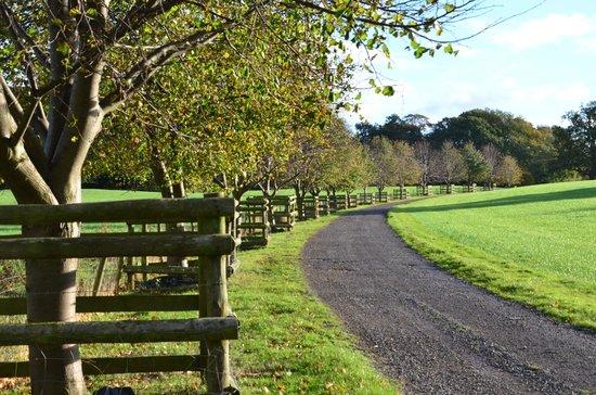 Combermere Abbey: Woodland Walk