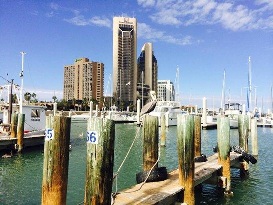Staybridge Suites Corpus Christi : Corpus Christi Marina about 6 miles from the Staybridge Suites
