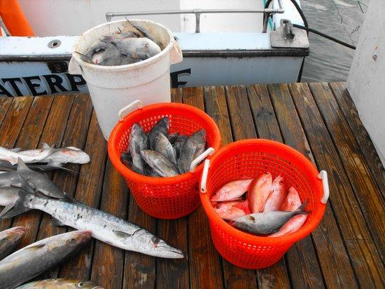 Ponce de Leon Inlet Lighthouse & Museum: Fishfang nach 10 Stunden auf dem Meer, jetzt wird erstmal geputzt