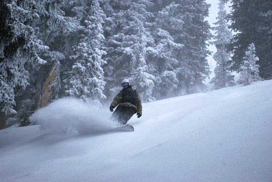 Utah Mountain Resort Tours : Canyons tree skiing