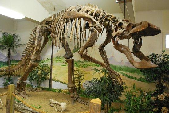 Ekalaka, MT: Anatotitan skeleton