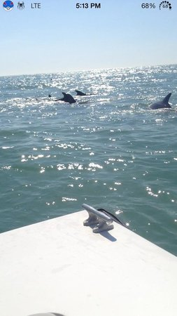 Speed Boat Adventures: The dolphins were beautiful