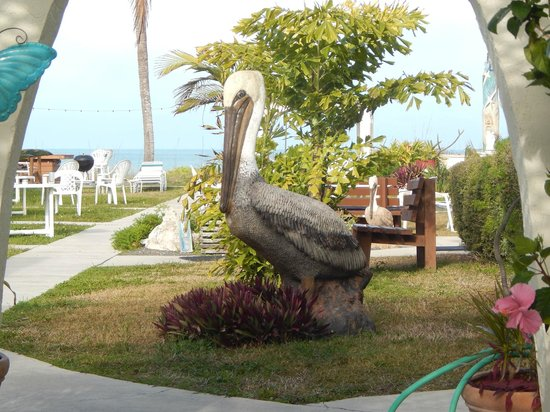 Gulf Sands Beach Resort : COURT YARD