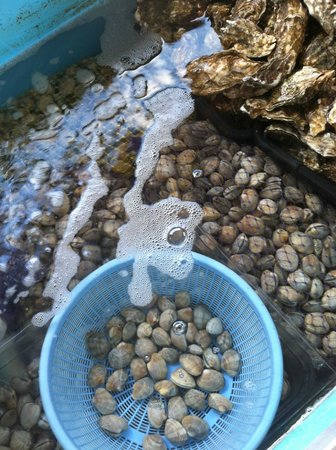 Crab Pot : Live Bay Clams and Oysters in the Market