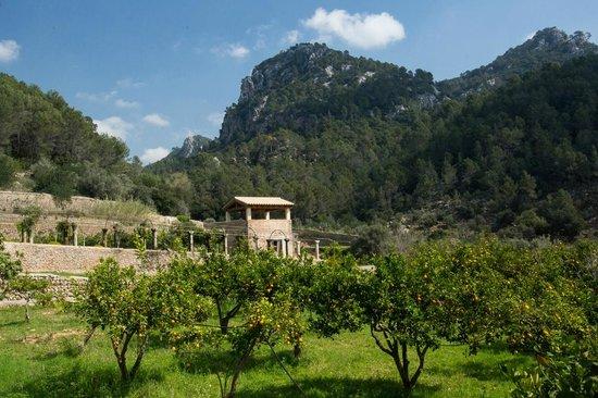 Jardines de Alfabia: View from the gardens