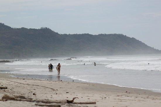 Gumbo Limbo Villas: beach