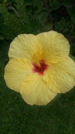 Days Inn Maui Oceanfront: Flowers outside of our room
