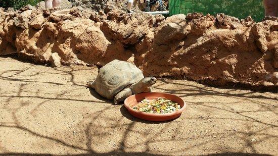 Rancho Texas Lanzarote Park : Turtle :)